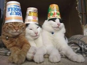 Trio Kucing Lucu Siap Show
