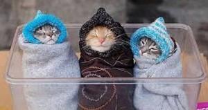 3 Kucing Lucu Siap Dinina Boboin